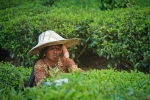 Women's Agriculture Work Potentially Have Negative Outcomes: Study